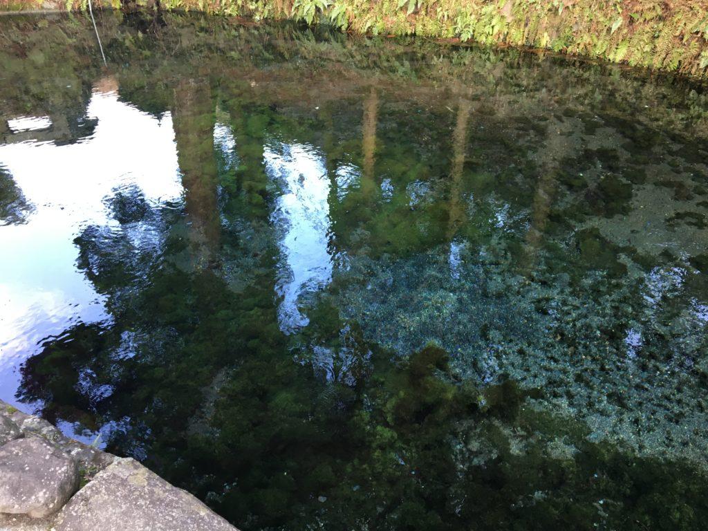 白川水源景観1