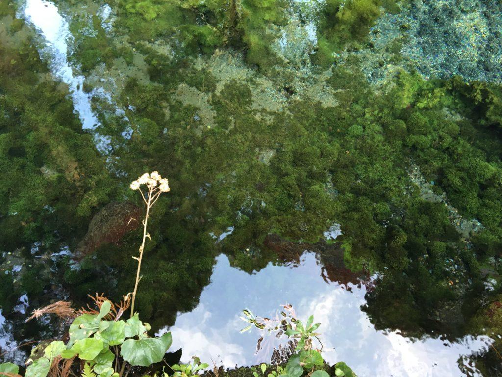 白川水源景観2