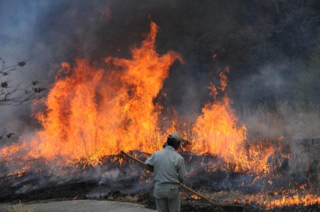 野焼きの火