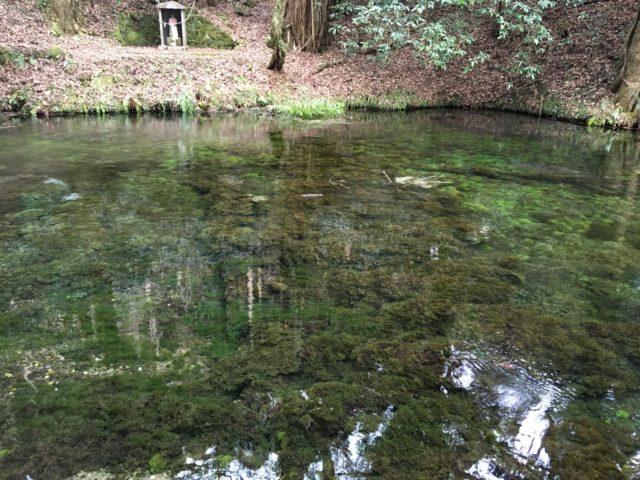 池山水源の水源