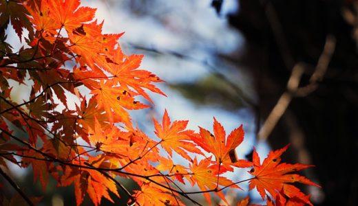 阿蘇で紅葉を見るならココ!阿蘇・南阿蘇方面の紅葉スポット12選!