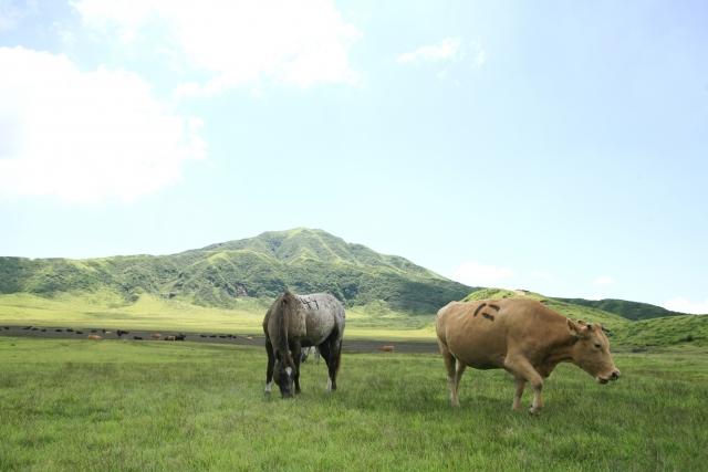 草千里と赤牛
