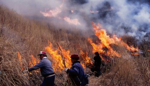 【野焼き】山を守る野焼きの効果とは?阿蘇の野焼きは観光にオススメ!