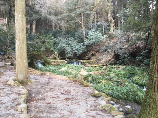 池山水源の樹木